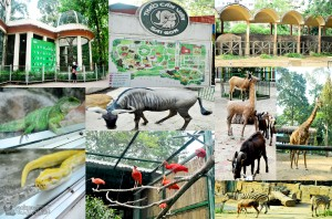 Some of the animals that you can see in the zoo
